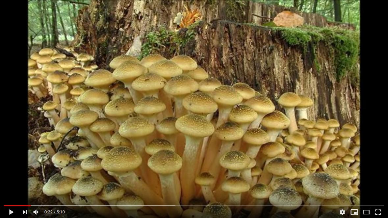 Mercoledì a Montecampione parliamo di funghi – Da Youtube: CLASSIFICA TOP 15 FUNGHI COMMESTIBILI